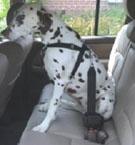 honderek hondenet