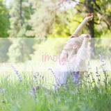 Vinove Imola dames parfum